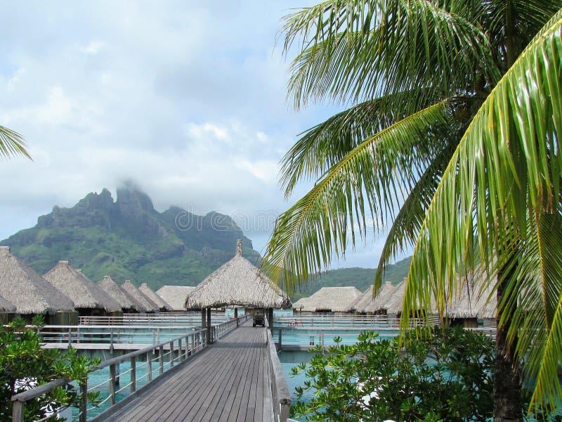 Bora Bora - рай в цвете стоковые фотографии rf