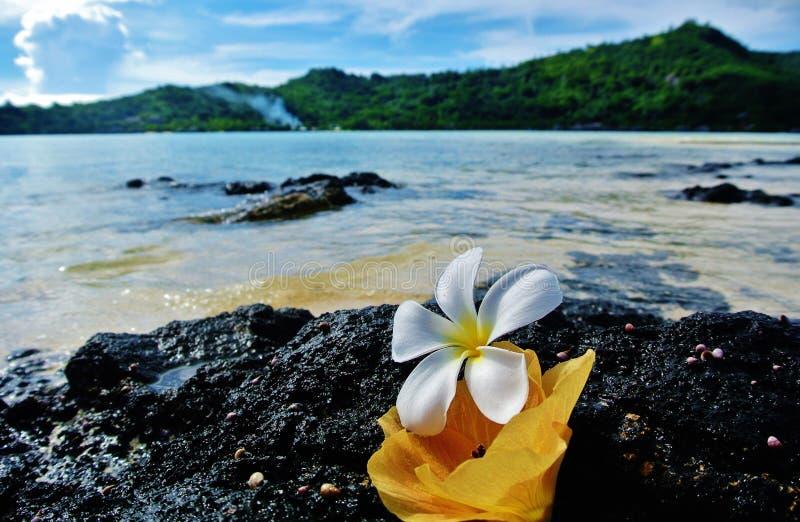 Bora Bora, Blumen auf Lavafelsen stockfotografie