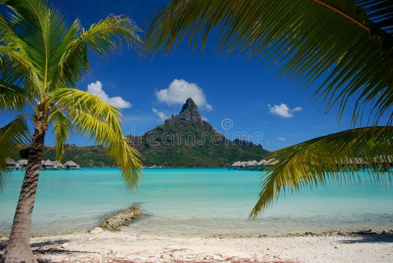 Bora Bora. Beautiful view of Otemanu mountain on Bora Bora framed by lush coconut palms
