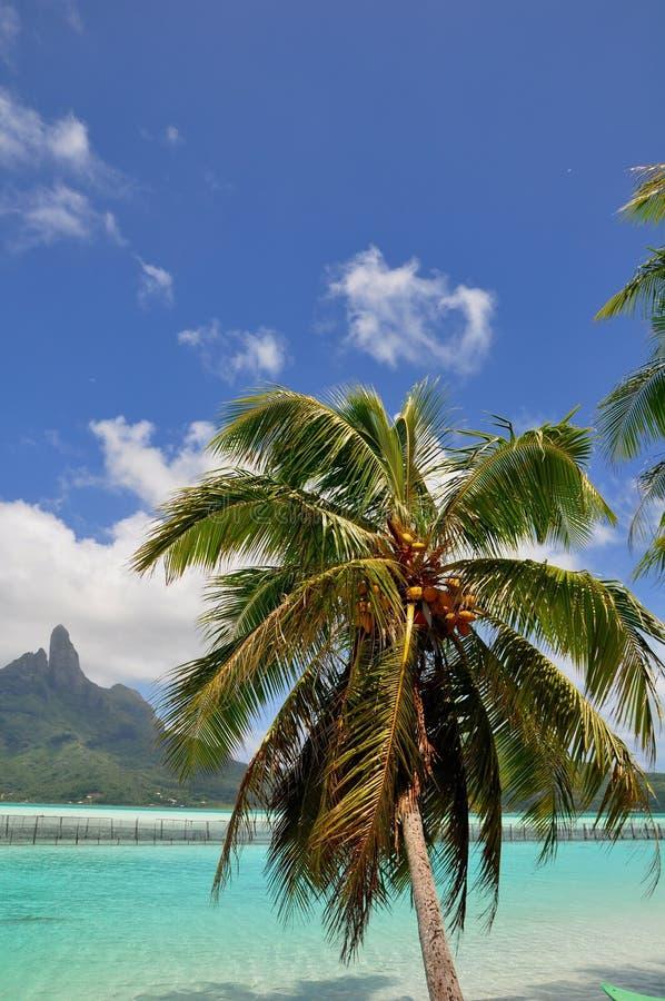Bora Bora, Französisch-Polynesien lizenzfreies stockbild