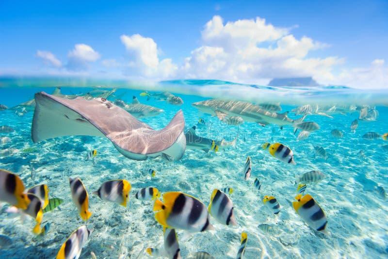 Bora Bora subacuático fotografía de archivo libre de regalías