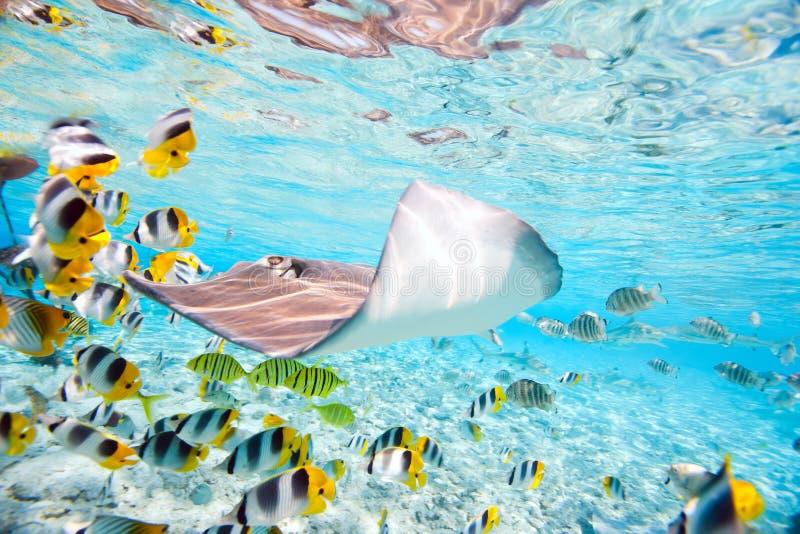 Bora Bora underwater royalty free stock photo