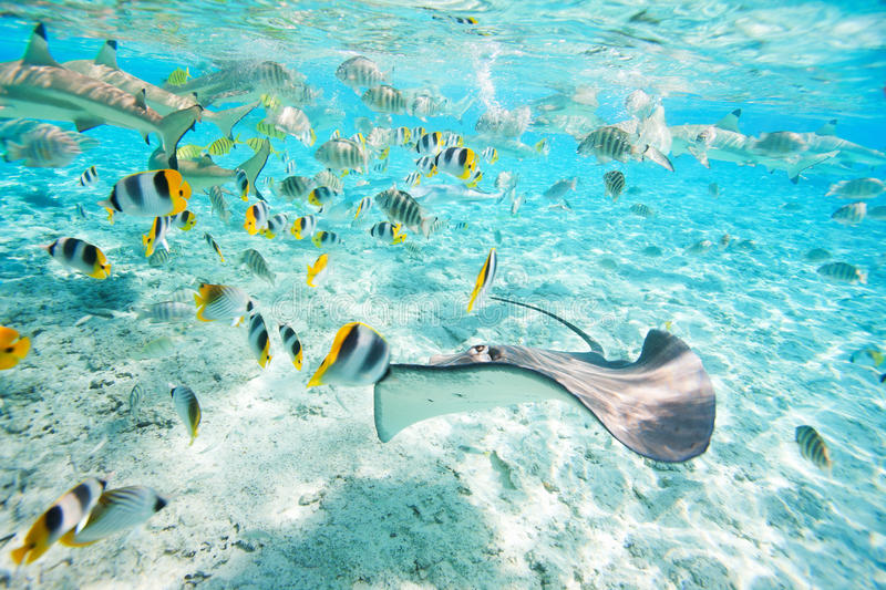 Bora Bora underwater royalty free stock photography