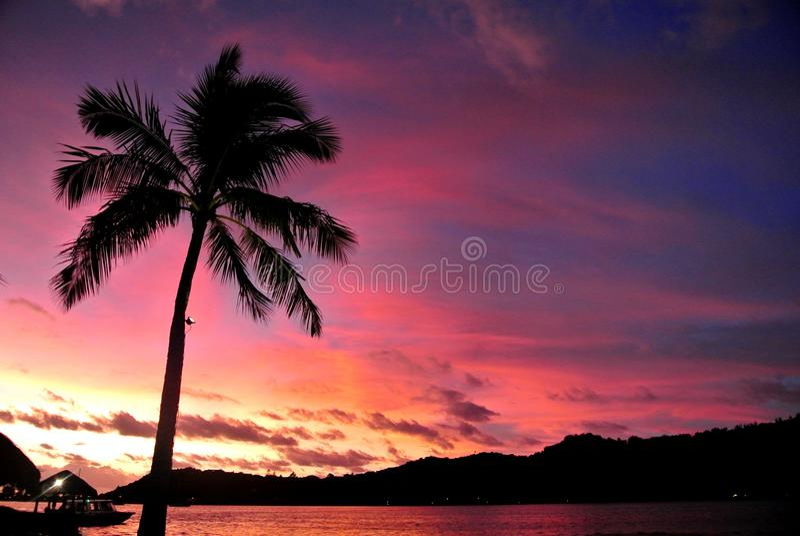 Bora Bora, Palm Tree Sunset. Silhouette palm tree on beach in Bora Bora at sunset with pink, yellow, orange, blue colored sky royalty free stock photo
