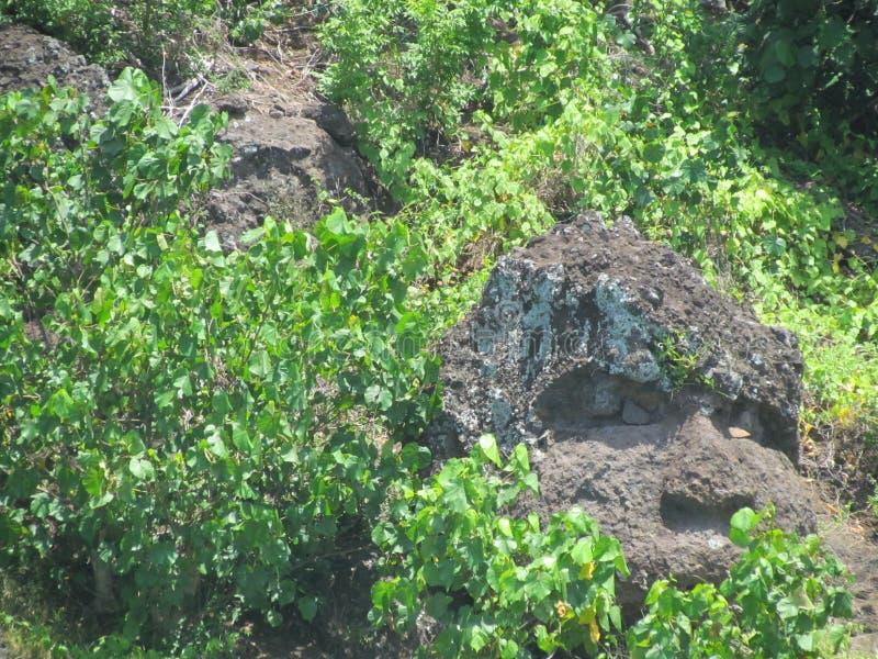 Bora Bora - visage de singe de roche photos libres de droits