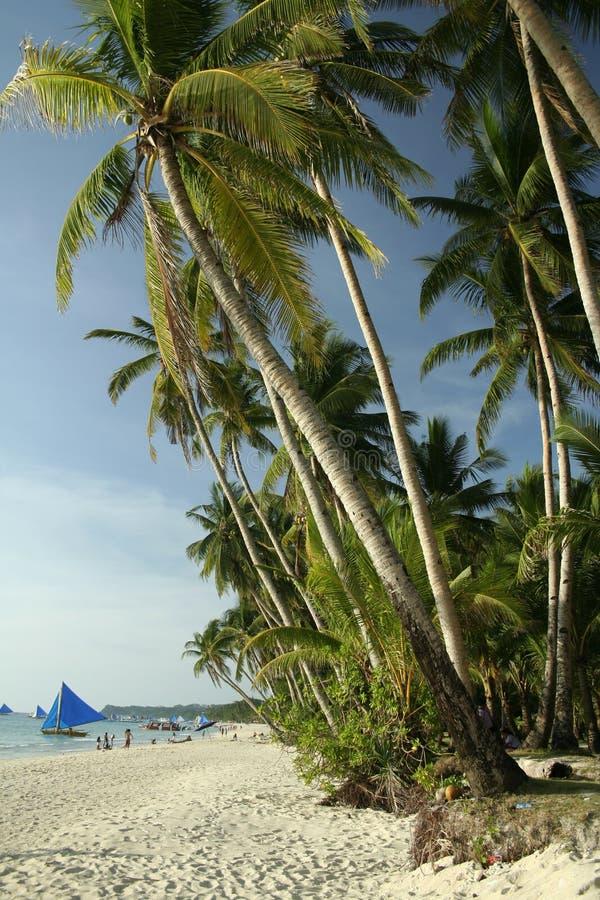 Boracay island white beach palm trees philippines royalty free stock photography