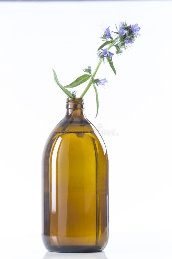 Borago Officinalis масла Borage стоковые изображения rf