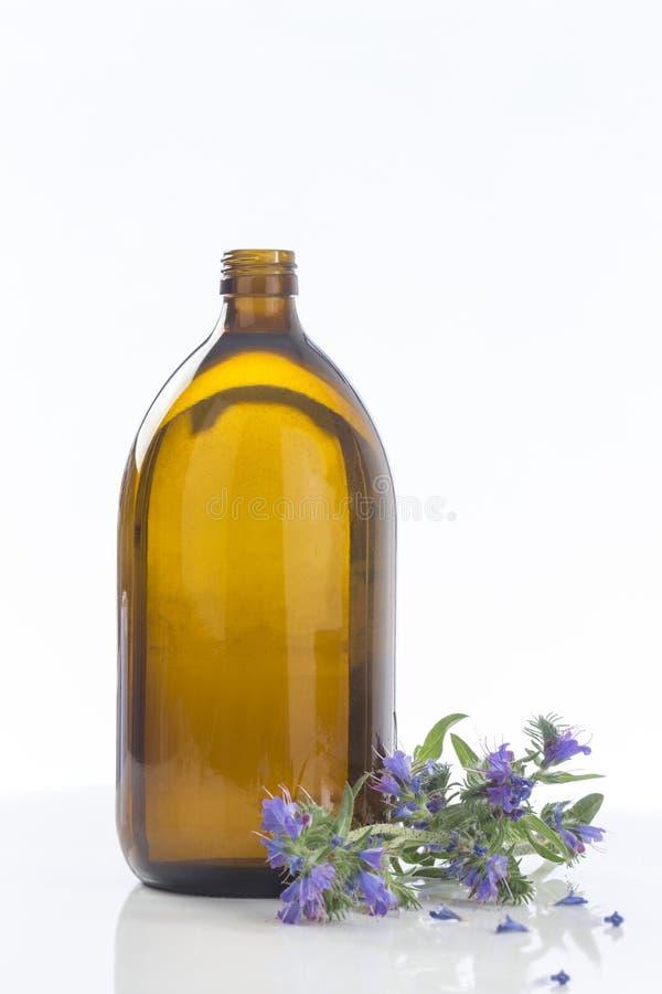 Borago Officinalis del aceite de la borraja imagenes de archivo