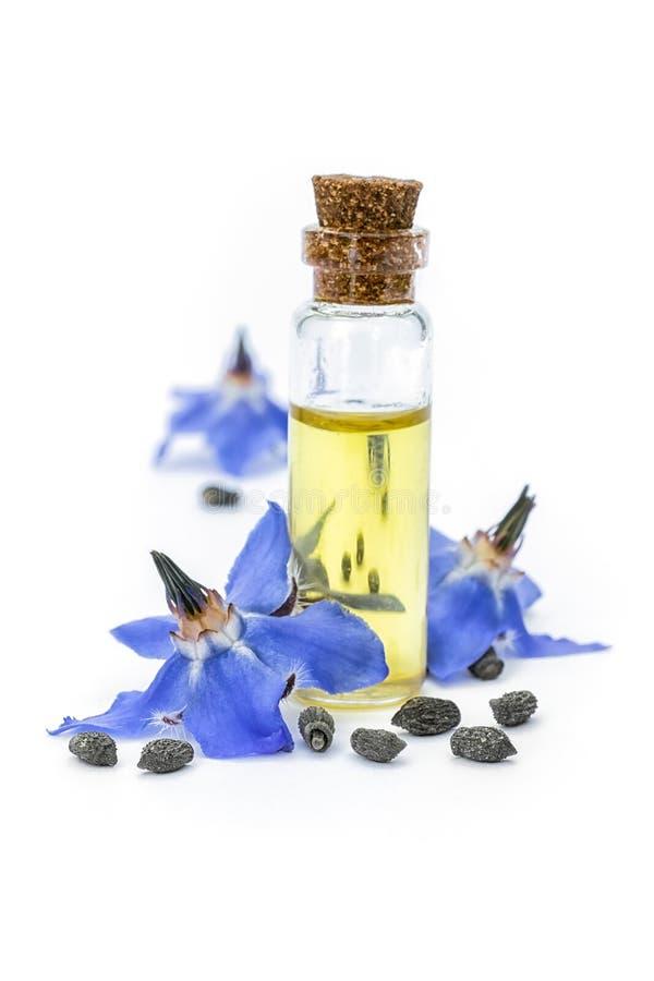 Borago officinalis dell'olio di borragine; fiori e semi sulla parte posteriore di bianco fotografia stock libera da diritti