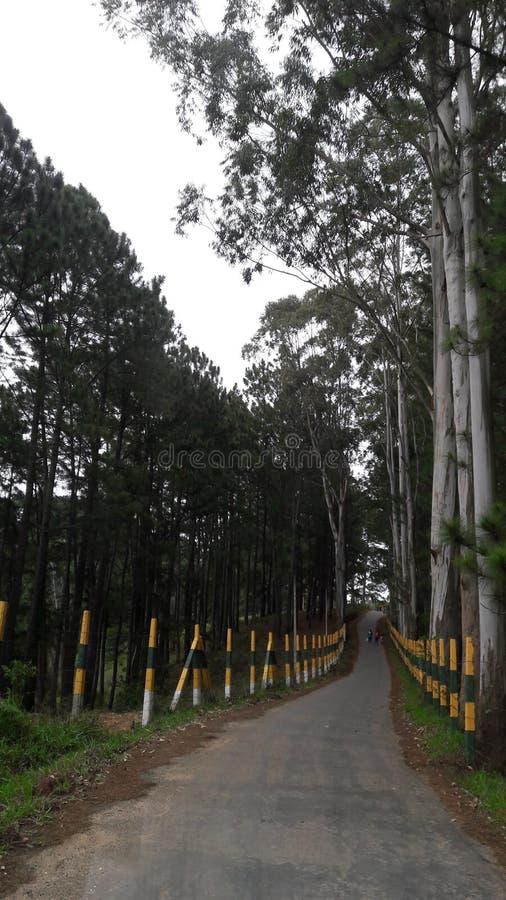 Boralanda lantgårdväg Sri Lanka arkivfoto