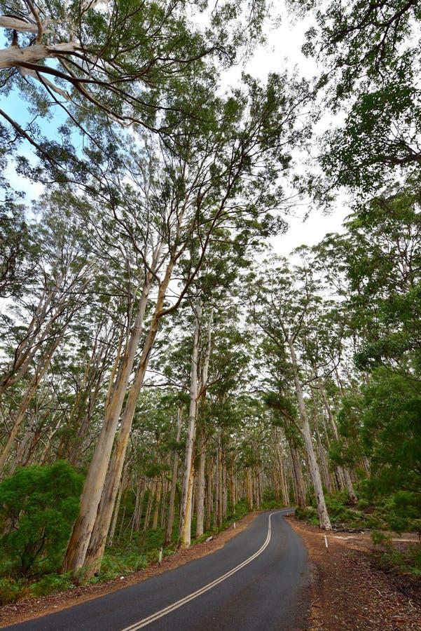 Boranup Karri Forest i västra Australien arkivbild