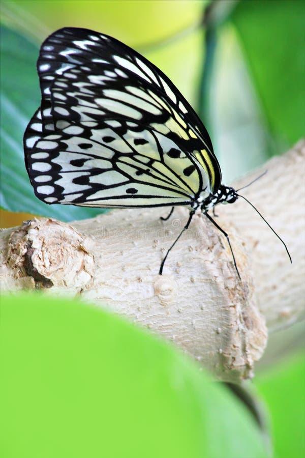 Download Borboleta foto de stock. Imagem de borboleta, inseto - 10050112