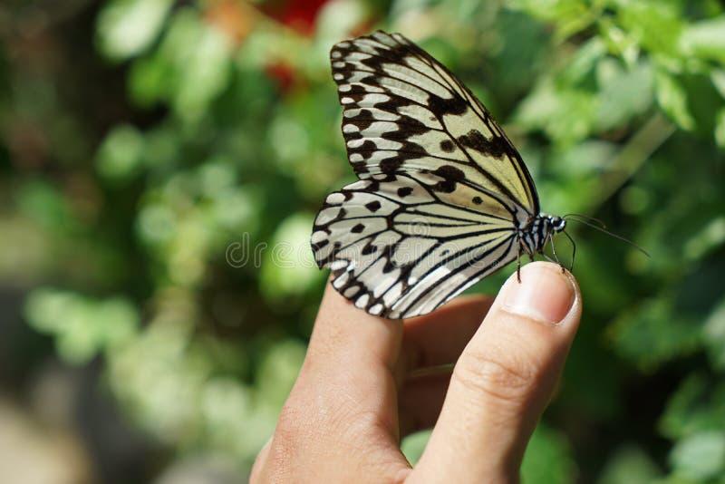 A borboleta imagem de stock royalty free