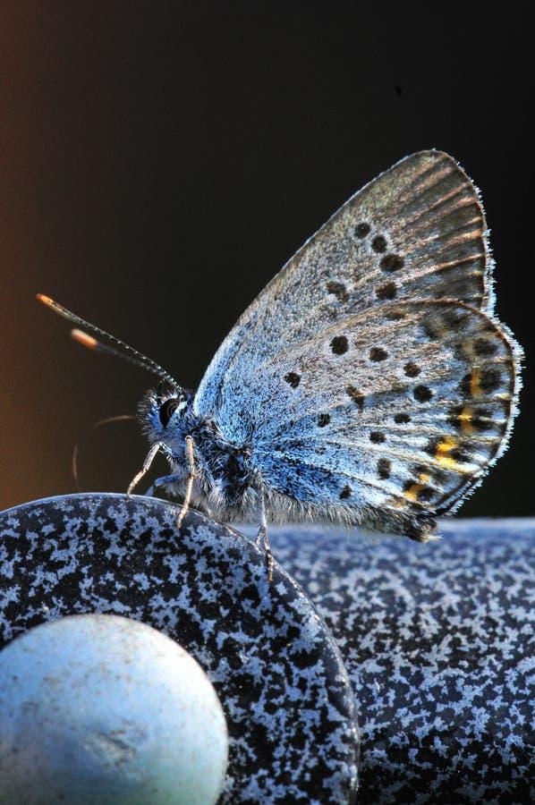 A borboleta fotos de stock royalty free