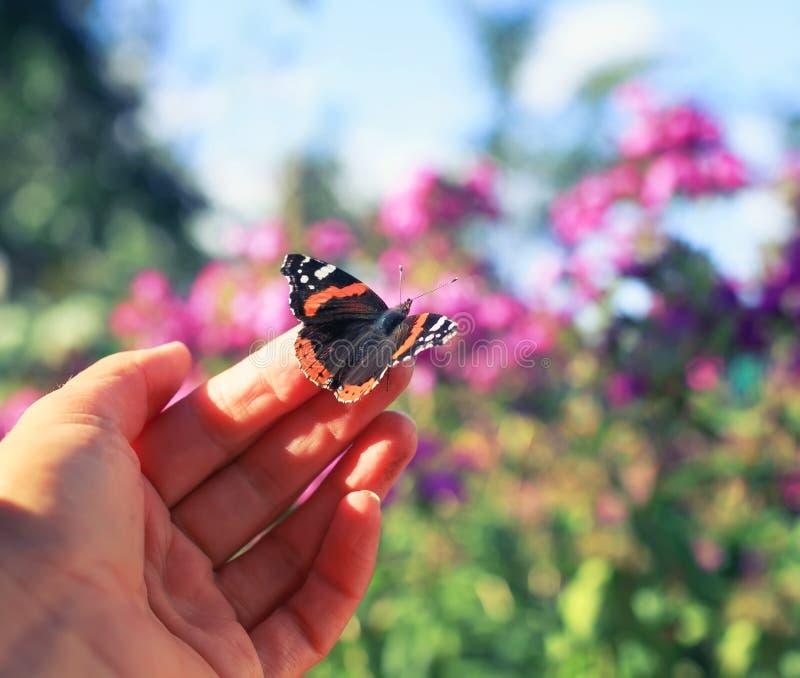 A borboleta alaranjada senta-se nos dedos de uma mão do ` s do homem e é-se goi fotos de stock