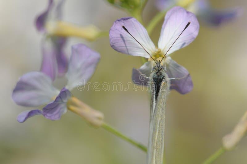 A borboleta ama flores imagem de stock