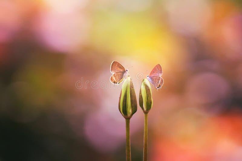 borboleta, animais, macro foto de stock