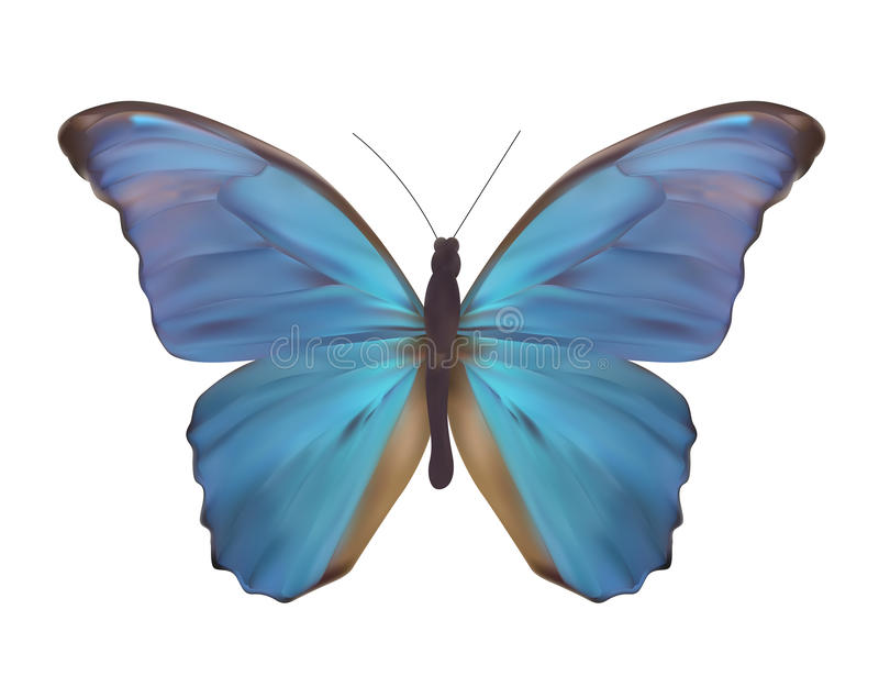 Borboleta azul isolada na ilustração realística branca do vetor ilustração royalty free