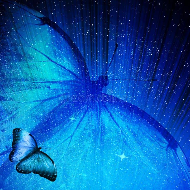 Borboleta azul no fundo azul foto de stock royalty free