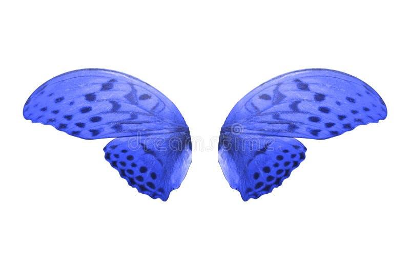 Borboleta azul tropical Isolado no branco fotos de stock
