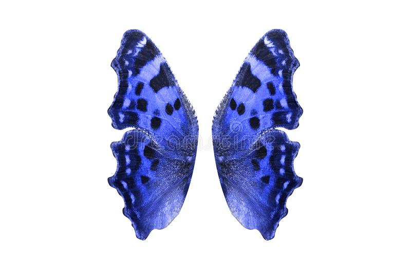 Borboleta azul tropical Isolado no branco imagem de stock royalty free