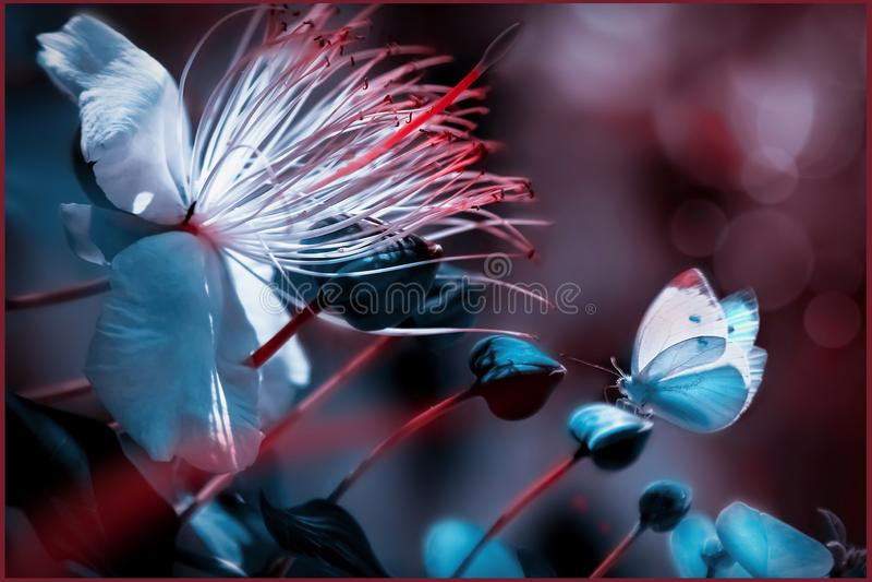 Borboleta bonita contra uma flor branca tropical Cor azul e coral verão natural e imagem macro artística da mola imagem de stock