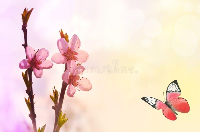 Borboleta bonita e flor cor-de-rosa, fundo amarelo fotografia de stock royalty free