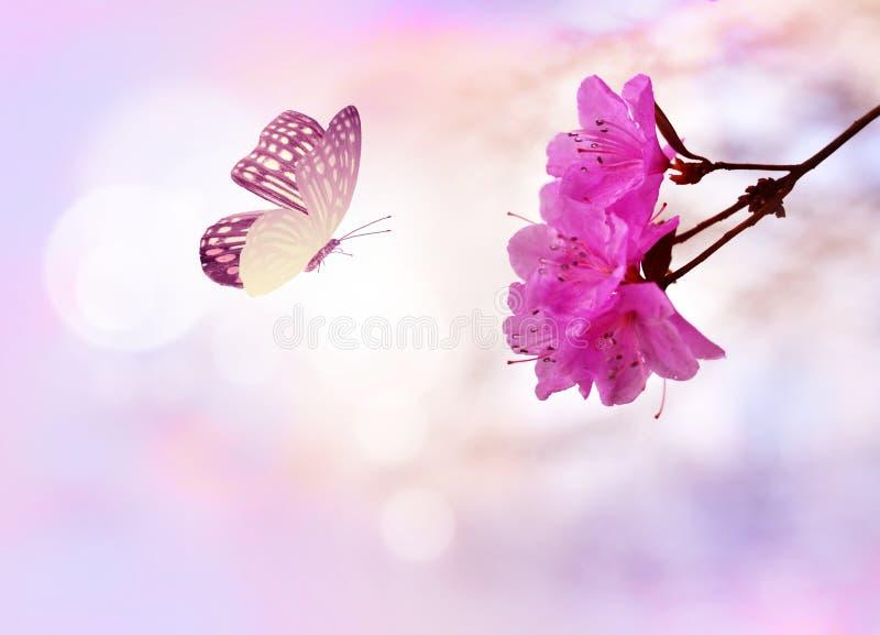 Borboleta bonita na flor branca, fundo do c?u imagens de stock royalty free