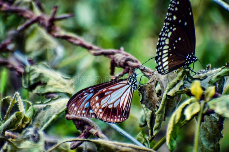 borboleta 2 colorida imagens de stock