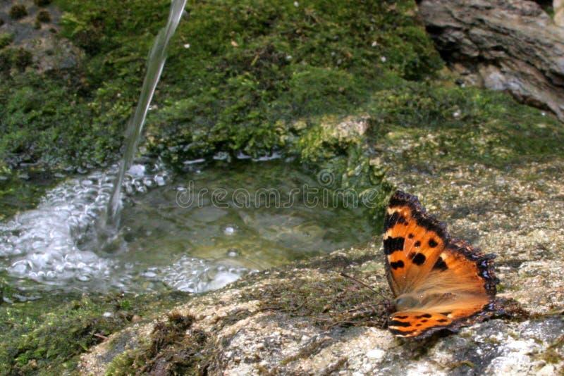Borboleta com água balbuciando foto de stock royalty free