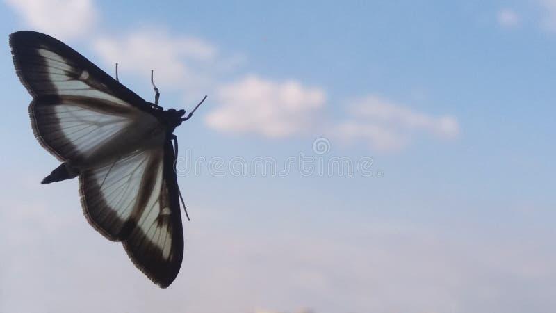 Borboleta com asas vazias imagens de stock