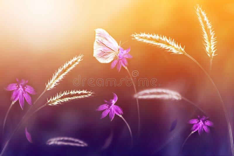 Borboleta cor-de-rosa contra um fundo de flores selvagens em tons roxos e amarelos Imagem artística Foco macio imagem de stock royalty free