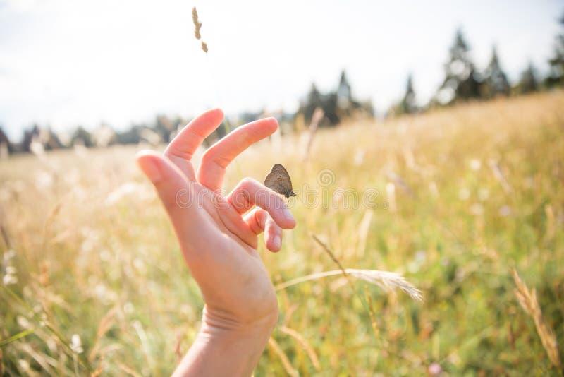 Borboleta de Brown na mão da mulher em Sunny Summer Day com campos imagem de stock