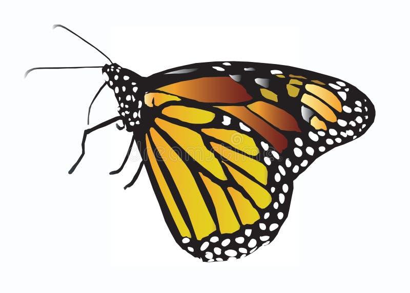 Borboleta de monarca ilustração royalty free