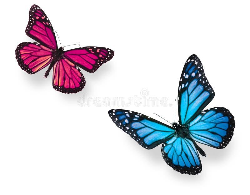 Borboleta de monarca azul e cor-de-rosa foto de stock
