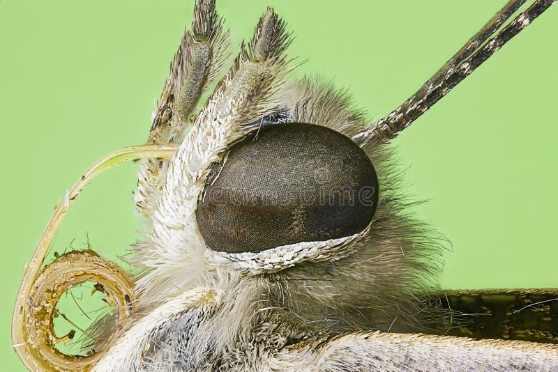 Borboleta de monarca macro extrema fotos de stock