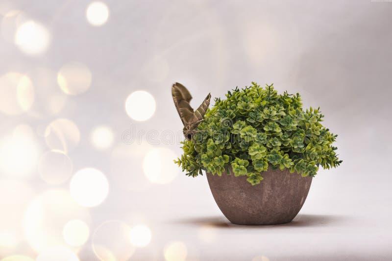 A borboleta decora sobre a planta e com bokeh do ouro no fundo branco fotografia de stock royalty free