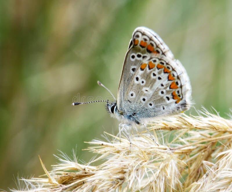 borboleta detal macro da natureza fotografia de stock
