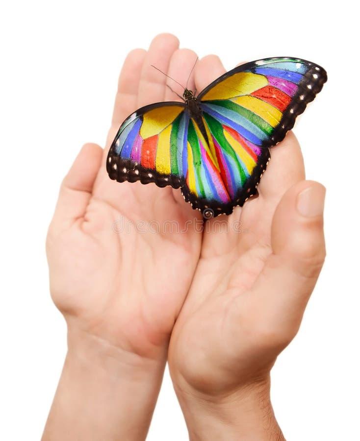 Borboleta do arco-íris foto de stock