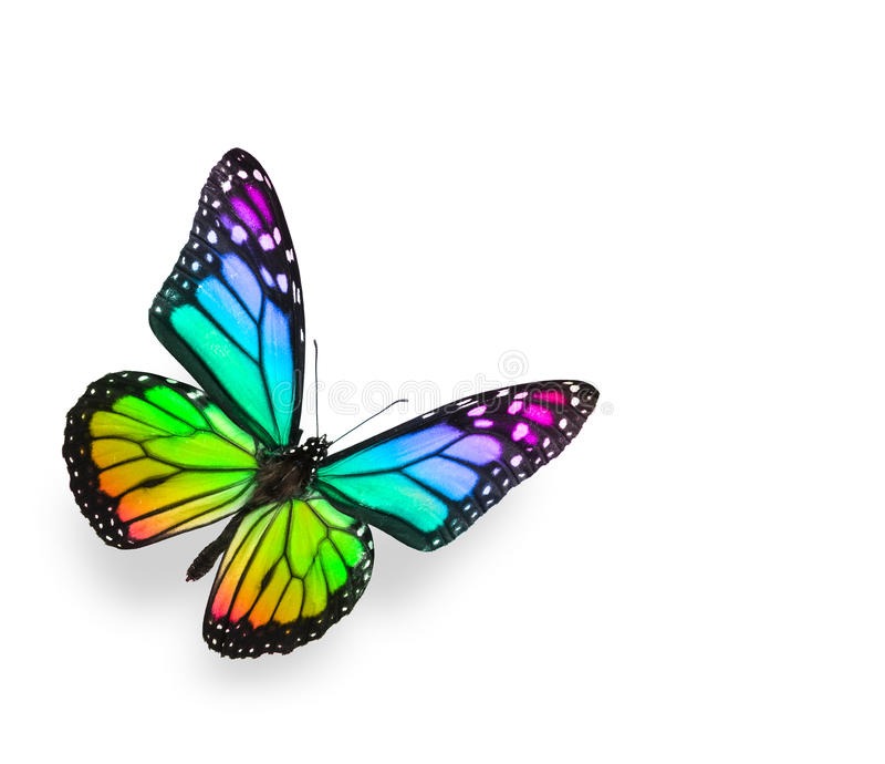 Borboleta do arco-íris isolada no branco imagens de stock
