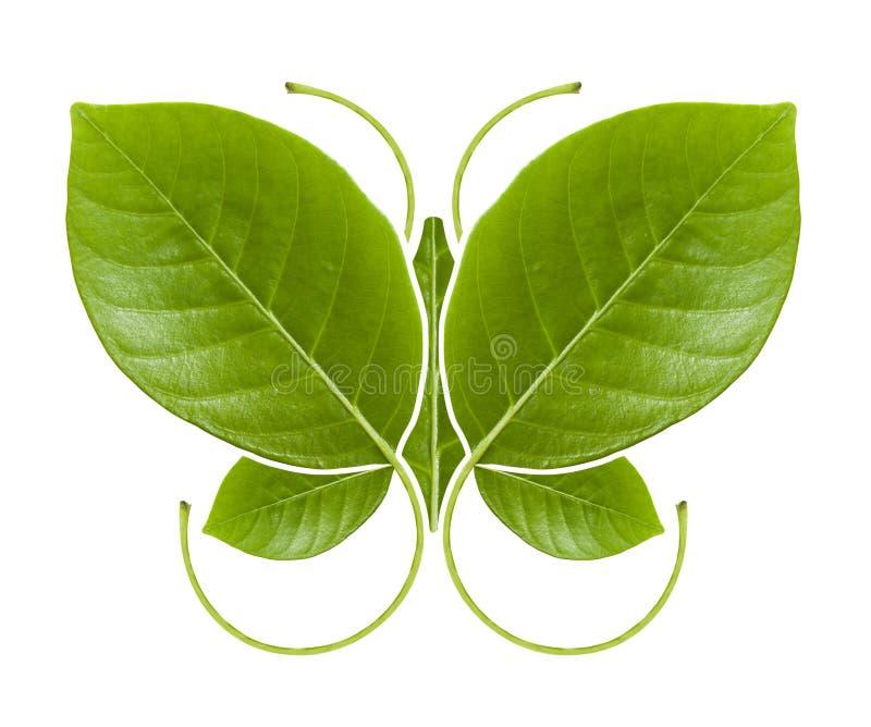Borboleta do verde do símbolo de Eco foto de stock