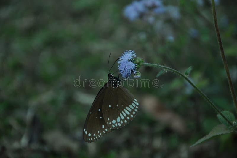 A borboleta do voo é bonita fotos de stock