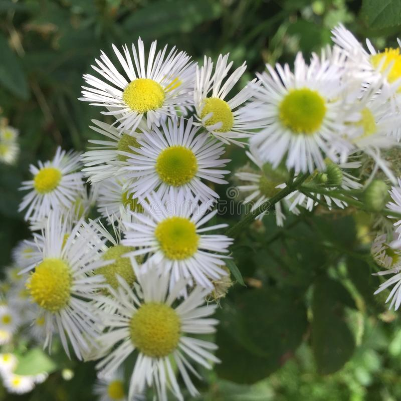 Borboleta e flor foto de stock