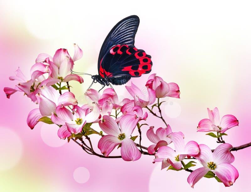 Borboleta e flores fotos de stock royalty free