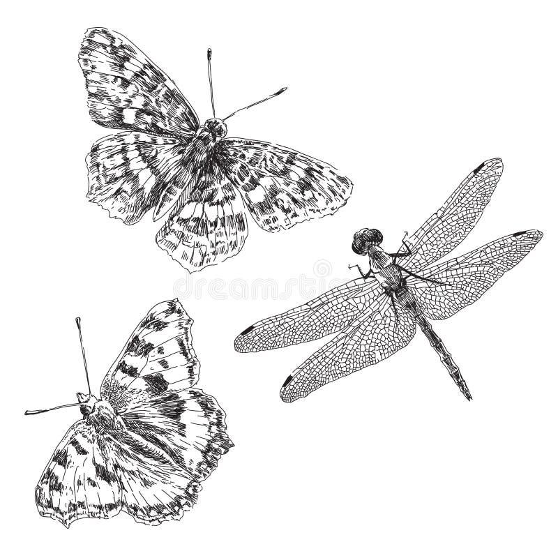 Borboleta e libélula tiradas mão ilustração do vetor