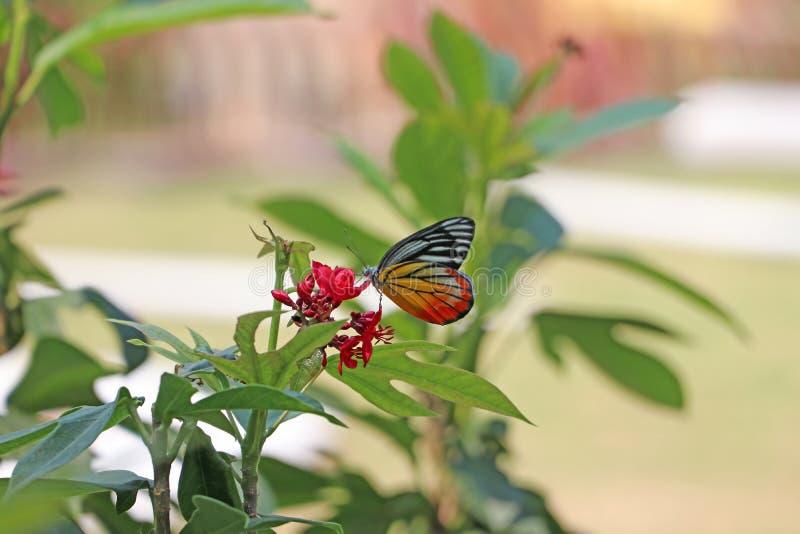 A borboleta em flores vermelhas com fundo verde da natureza do borrão foto de stock