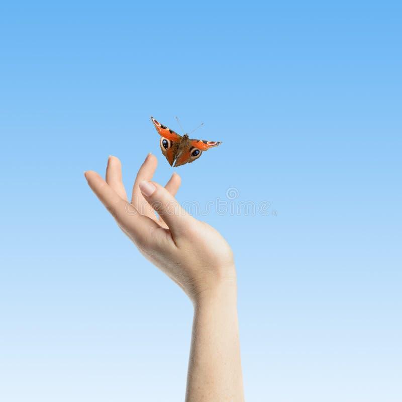 A borboleta em suas mãos foto de stock royalty free