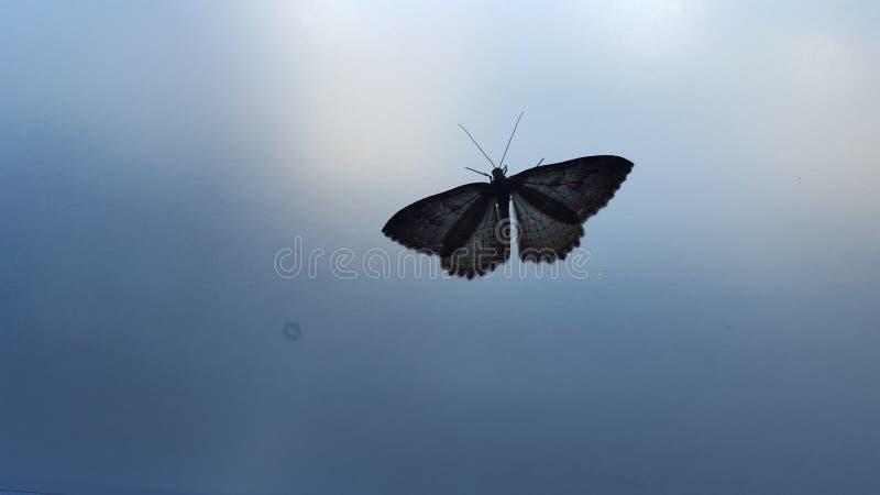 borboleta em uma janela fotografia de stock
