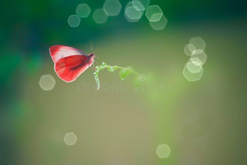 Borboleta fantástica na natureza fotografia de stock