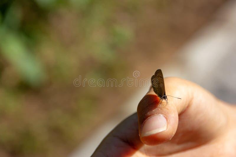 borboleta Fio de teia-voada disponível da mulher asiática na floresta fotos de stock royalty free